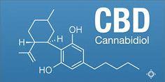 Cannabinoids May Even Help in Huntington's Disease https://elixinol.com/blog/cannabinoids-may-even-help-in-huntingtons-disease?utm_source=rss&utm_medium=Friendly+Connect&utm_campaign=RSS @Elixinol #hemp #hemplife