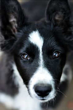 The eyes have it #dogs #furpals