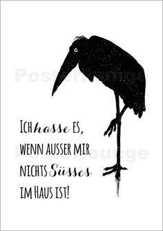 Poster Vogel Nichts Suesses