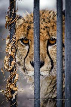 Prison -