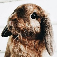 Bunnies / animals / cute / xx