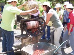 The Don Juan Coffee Tour offers an interesting opportunity to learn about coffee and Costa Rican folklore.  #costarica | monteverdetours.com