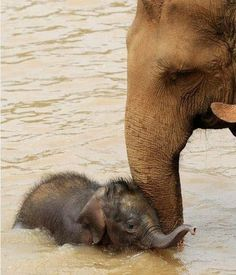 .Mother Elephant bathing her Young