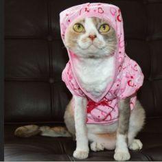 Kitten in bedtime pink