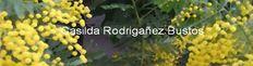 https://sites.google.com/site/casildarodriganez/apuntes-para-re-escribir-la-historia  Sitio de Casilda Rodrigáñez