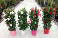House Plants, Plants, Bulb Flowers, Artificial Plants, Patio Plants, Mediterranean Garden, Garden Vines, Potted Plants Outdoor, Garden Supplies