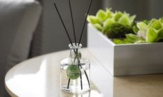 White Tea by Westin™ Diffuser Oil by Westin At Home. $65.00. Refresh and reinvigorate your space with the soothing scent of white tea. Natural rattan reeds absorb the fragranced oil, draw it to the top and gently diffuse it into the home. Fragrance lasts up to 2 months.    4.5 oz.  A Westin™ at Home exclusive.
