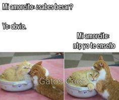 "45 Me gusta, 0 comentarios - Gatos Cool (@gatoscooloficial) en Instagram: ""Sabes besar? . . . #memesdegatoscool #gatoscool😸 #gatos_cool #besar #besame #besos #kiss #kisses…"" Gatos Cool, Cool Stuff, Cats, I Like You, Kisses, Gatos, Kitty Cats, Cat, Kitty"