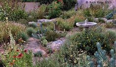 This fabulous Texas courtyard garden is maintained without irrigation, and very little watering.  More at ROCK ROSE: TO LOVE TEXAS YOU NEED TO KNOW TEXAS