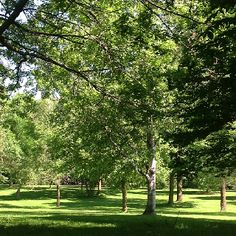 Arboretum 4 Photo Location, Golf Courses, Plants, Plant, Planting, Planets