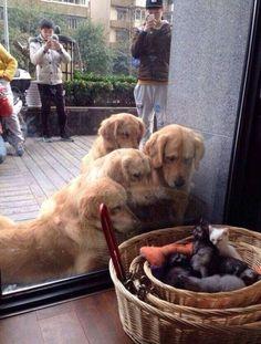 """""""Hey Guys, Wake Up!! Maybe We Should Start Running…"""""""