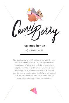 Wellness Encyclopedia: All About Camu + A Churn-Free Vegan Ice Cream Recipe | Free People Blog #freepeople