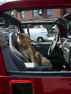Jeep Dog on Centre Street