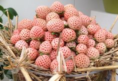 Abacarango: Morango branco com sabor de abacaxi / Pineberry: White strawberry with pineapple flavor White Strawberry, Strawberry Garden, Strawberry Plants, Colorful Fruit, Exotic Fruit, House Plant Delivery, Strange Fruit, Wild Strawberries, Different Plants