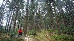 Studie zu Waldschutz im Südwesten Totes Holz, wildes Gebüsch - sehr erwünscht!  Mangelhaft - diese Note gibt die Umweltschutzorganisation Greenpeace allen Bundesländern, wenn es um Waldschutz geht. Baden-Württemberg und Rheinland-Pfalz schneiden nicht gerade rosig ab.