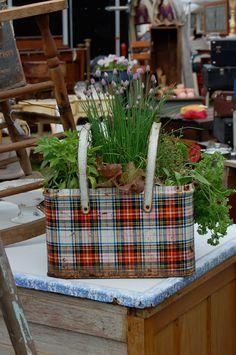 Super cute idea for an herb garden planter...repurpose old tin container (or even Mod Pod over an old Christmas popcorn tin).
