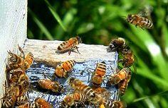 la colmena = el perfecto trabajo en equipo y red colaborativa. Son CRACKS !