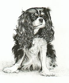 Image detail for -Cavalier King Charles