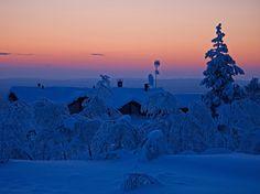 Gold winter ewening, Saariselkä Ivalo Finland Photo Aili Alaiso