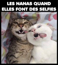 Tu fais l'idiot , je fais l'idiote ! Funny Animal Memes, Cute Funny Animals, Animal Quotes, Funny Dogs, Cute Cats, Funny Memes, Hilarious, I Love Cats, Crazy Cats