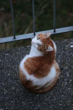 cute #cat #whitecat