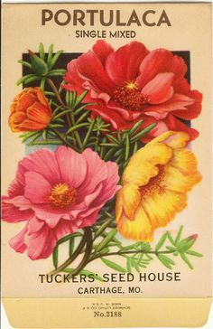 Vintage Tucker Flower Seed Packet Lithograph PORTULACA