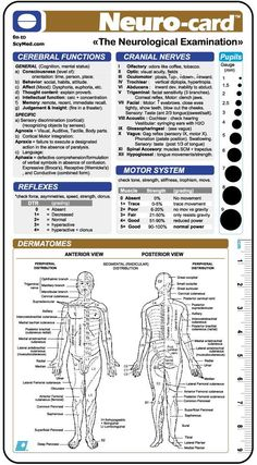 neuro exam template Neuro-card :::: by SCYMED :: Medical Decision Systems :::: Nursing School Notes, Icu Nursing, Neurological Assessment, Advanced Nursing, Medical Anatomy, Emergency Medicine, Medical Science, Computer Science, Medical Information