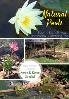 """What do you think of the funky new design of our """"NATURAL POOLS 