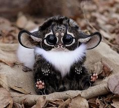 Inari Fox (Japanese fox) Tag your friend. .  Stuffed By : ©Santani, @santaniel_toys #nature #fox #wow #animal #animals #cool #amazing!