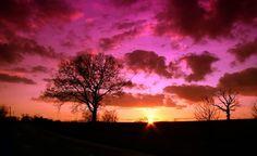 arbre coucher de soleil nature ciel