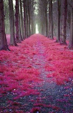 Mystic Forest in ,Natherland,