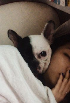 frenchbulldog with me