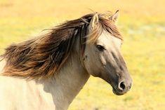 Free Photo: Horse, Pasture, Nature, Animals - Free Image on Pixabay - 197199 Horse Spirit Animal, Brown Horse, Horse Quotes, Horse Stables, Large Animals, Horse Pictures, Pictures Images, Nature Pictures, Palomino