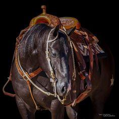 American Quarter Horse, Horse Tack, Horses, Animals, Horse Love, Animales, Animaux, Horse, Animal