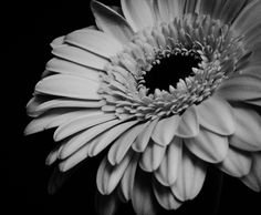 A pretty pink flower converted to black and white .....