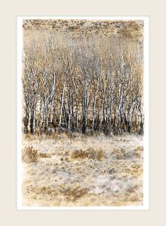Bare Trees - Marlene Neumann Fine Art Photography www. Fine Art Photography, Landscape Photography, Neumann, Bare Tree, Home Office Decor, Photo Art, Unique Gifts, Trees, African
