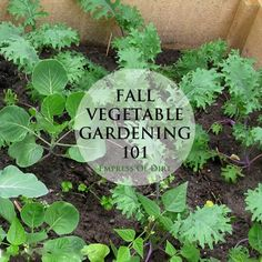 How to get started with cold weather vegetable gardening #spon