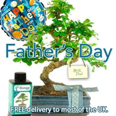 Bonsai Gift Perfect for Father's Day Presents