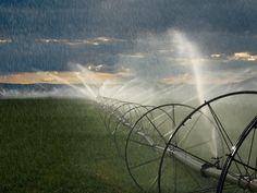 Alfalfa Field Irrigation, Oregon