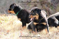 <3 puppies :)