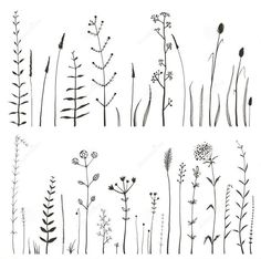 Sketchy Wild Field Flowers and Grass on White Royalty Free Stock Photo - planner/doodles - Blumen Doodle Drawings, Doodle Art, Photo Doodle, Doodle Ideas, Wildflower Drawing, Watercolor Flower, Watercolor Sketch, Flower Doodles, Doodle Flowers
