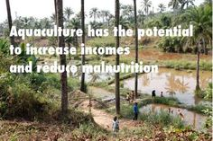 Aquaculture: The New Source of Seafood in 2013!