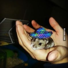 My granny knitted a sombrero for my hamster!