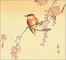 Roter Vogel und Kirschblüten