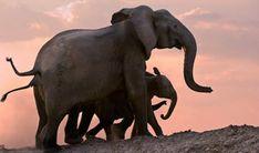 Luxury Southern Africa Beach Lodges - The Luxury Safari Company