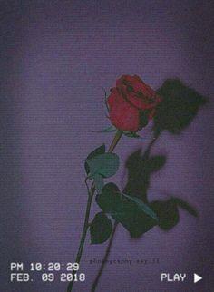 rangerhenrichon - 0 results for purple aesthetic Mood Wallpaper, Iphone Background Wallpaper, Aesthetic Pastel Wallpaper, Tumblr Wallpaper, Wallpaper Quotes, Aesthetic Wallpapers, Aesthetic Roses, Purple Aesthetic, Cozy Aesthetic