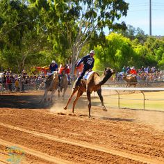 Camel Racing  #racing #camel #AliceSprings Travel Sights, Alice Springs, Camel, Travelling, Road Trip, Scenery, Racing, Australia, Events