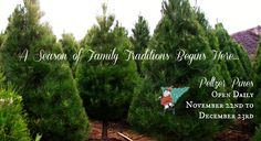Peltzer Pines Choose and Cut Christmas Tree Farms - A Season of Family Traditions Begins Here! Pine Christmas Tree, Christmas Love, Christmas Tree Photography, Cypress Trees, Family Traditions, Farms, Oc, November