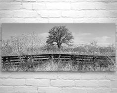 Large Nature Photography, Black and White Winter Art, Landscape Print, Large Art, Wall Print, Panorama, Home Decor, Wall Art, Arivaca
