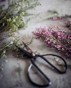 Mobili per bambini – Recycled Furnitures Ideas Claire Fraser, Still Life Photography, Food Photography, Flower Photography, Outlander, Aesthetic Pictures, How To Dry Basil, Herbalism, Lavender